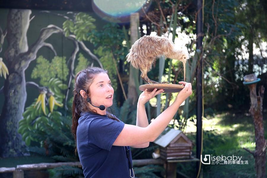 紐西蘭南島推薦景點 皇后鎮Kiwi Birdlife Park奇異鳥鳥類生態公園