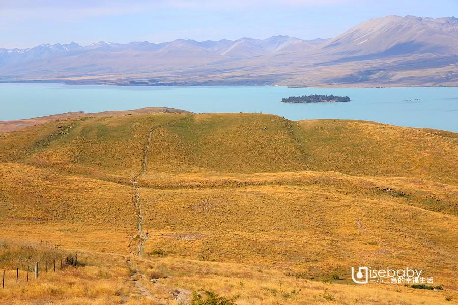 紐西蘭南島健行步道推薦 蒂卡波湖Mt John Summit Circuit Track