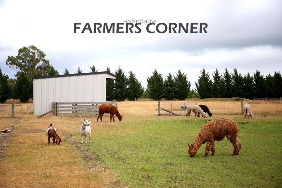 紐西蘭南島紀念品店Farmers Corner 免費參觀羊駝牧場和薰衣草田
