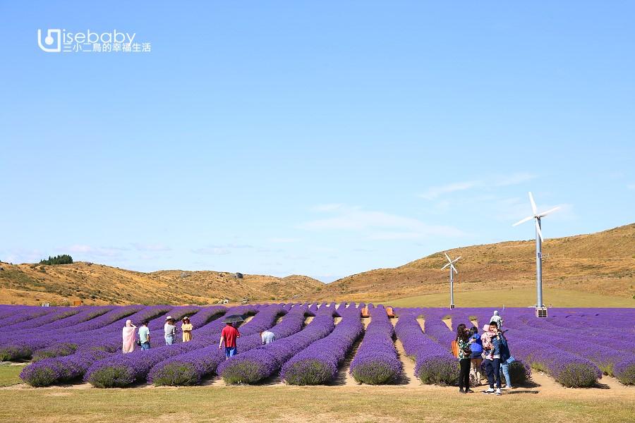 紐西蘭也有普羅旺斯薰衣草田!NZ Alpine Lavender農場冰淇淋推薦必吃