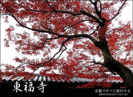 楓情Kyoto::第五天::世界文化遺產的饗宴