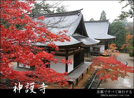 楓情Kyoto::第三天::紅楓與竹林的邂逅