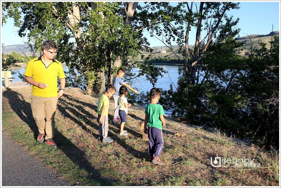 加拿大 加西露營行程Day 02。Surrey➠Kamloops.莓果農場採藍莓&野生動物黃腹土撥鼠初體驗