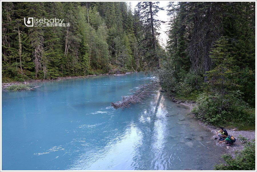 加拿大 健行。Berg Lake Trail.延著琥珀藍Robson River逆流而上的原始步道