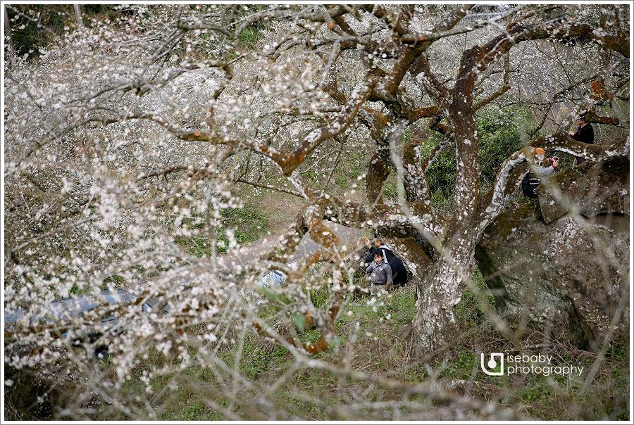 [景點] 南投信義::花見烏松崙.踏雪尋梅@烏松崙森林渡假營