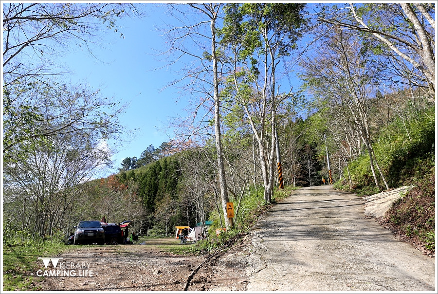 露營 | 新竹五峰。楓櫻杉林露營區.楓樹櫻花柳杉林下搭帳篷