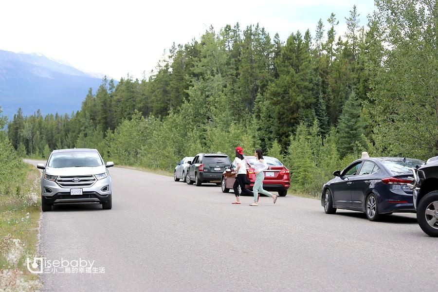 加拿大   加西露營行程Day 05。Jasper.賈斯伯最容易看到熊的重點行程