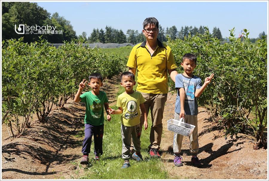 加拿大|景點。Krause Berry Farms.溫哥華近郊推薦行程U-PICK自採藍莓農場
