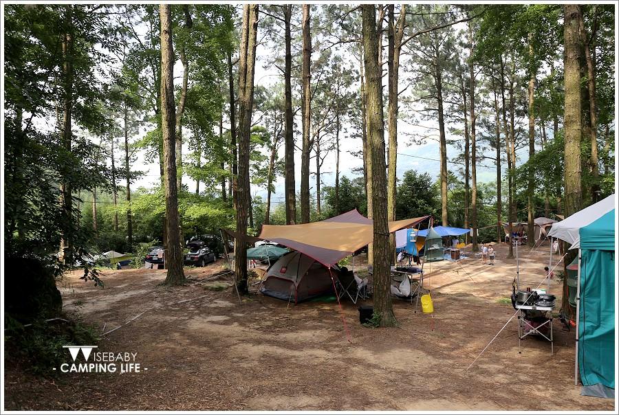 露營 | 苗栗南庄。松濤意境露營咖啡館.聽風與松樹的對語
